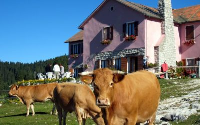 In Veneto Coldiretti denuncia le speculazioni sul latte e apre sportello virtuale