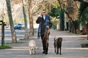 Massimo D'Alema a spasso con i cani, due splendidi labrador