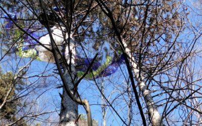 Pilota di parapendio recuperato incolume tra gli alberi di Semonzo del Grappa