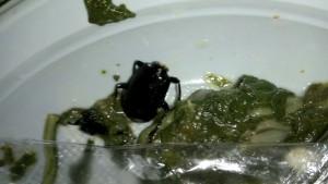 lo scarafaggio trovato nel piatto di un agente della Casa circondariale di Vicenza