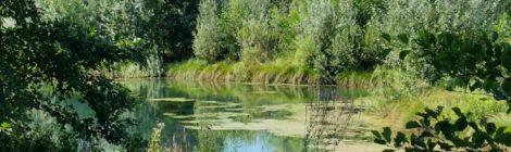 Parco del Bacchiglione: tre sabati di visite guidate e apertura libera ogni martedì pomeriggio