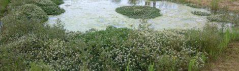 Visite guidate al parco delle risorgive del Bacchiglione tra Dueville, Caldogno e Villaverla
