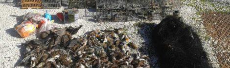 Polizia provinciale di Vicenza sorprende bracconiere con reti e richiami vivi e sequestra 400 uccellini in freezer