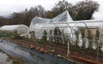Maltempo in Veneto, agricoltura e allevamento in ginocchio: primo bilancio di Coldiretti