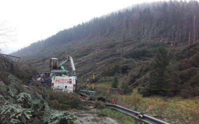 Maltempo e strage di alberi: in Altopiano di Asiago la disperazione di Coldiretti