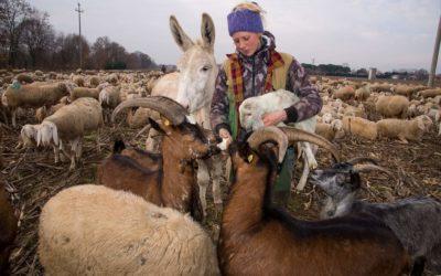 Donne venete Coldiretti perché la transumanza sia patrimonio Unesco