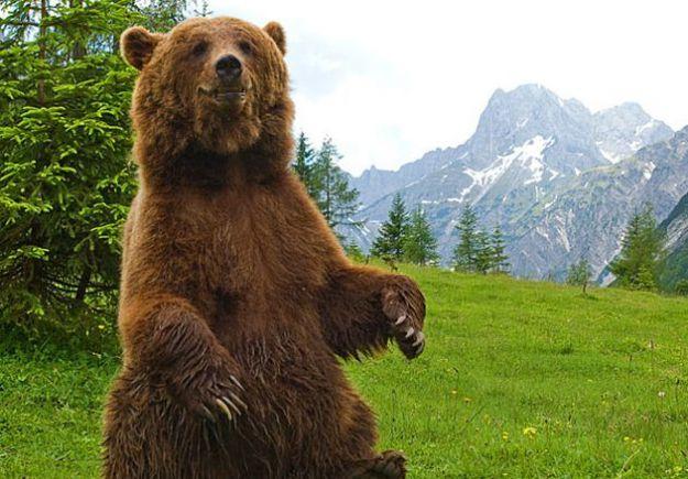 """Benedetti, Cunial e Nugnes sull'orso Papillon: """"non deve essere messo in quarantena!"""""""