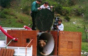 Era il 2000 e l'orsa slovena Daniza a 4 anni di vita venne liberata in Trentino