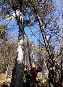 Un'immagine del recupero di un pilota di parapendio che si è impigliato tra gli alberi con la vela ai piedi del Monte Grappa.
