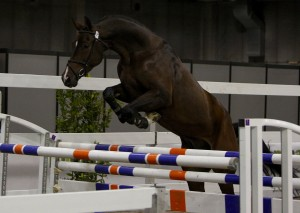 Cavallo da sella italiano