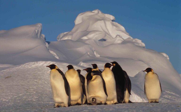 WWF: il 25 aprile è il World Penguin day