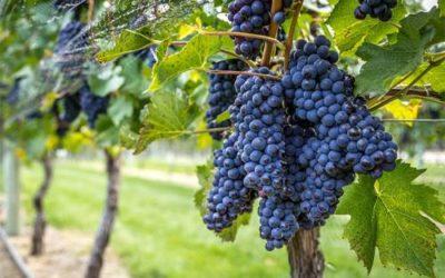 Veneto agricoltura e l'innovazione a Vinitaly 2019