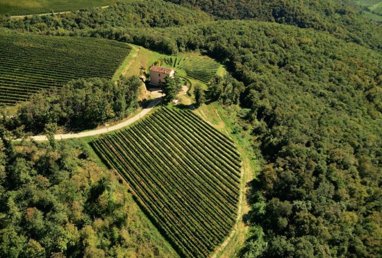 Coronavirus, Monte Zovo, un'azienda vitivinicola che ai lavoratori ci tiene