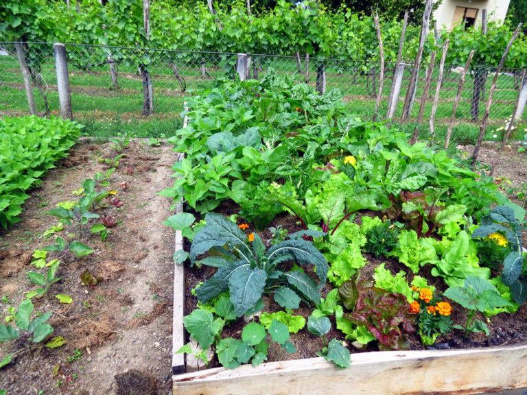 Coronavirus, Urbi et Horti comunica che si può fare l'orto perché serve!