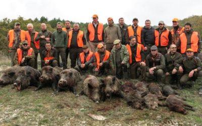 50.000 cinghiali liberi sono un flagello per i contadini del Veneto
