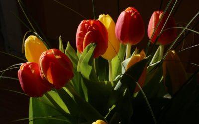 In Veneto si torna negli orti, Coldiretti soddisfatti per vendita fiori al mercato e take away negli agriturismi