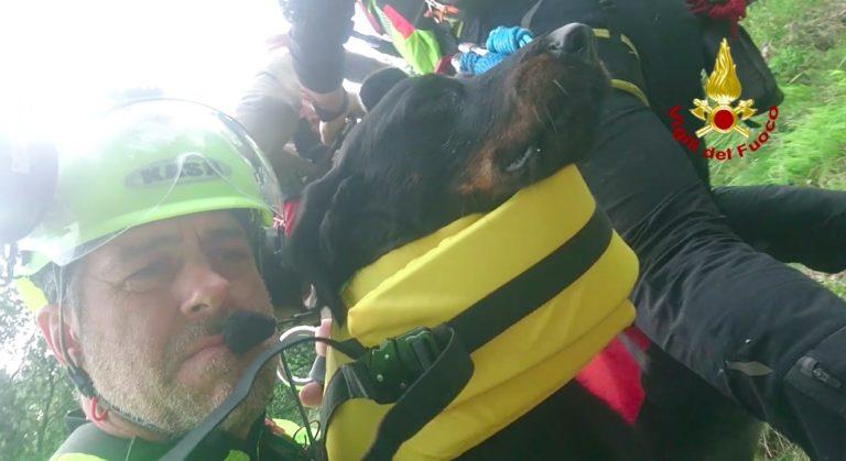 Cane morso da vipera sul Col Nudo in Alpago soccorso da Drago 71 dei VV FF [VIDEO]