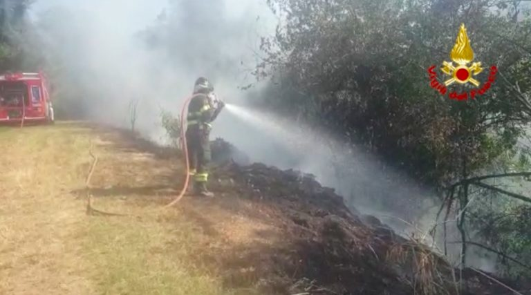 A Longare incendio ramaglie minaccia vigneto [VIDEO]