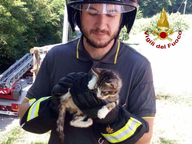 I pompieri salvano davvero i gattini sugli alberi [FOTO]