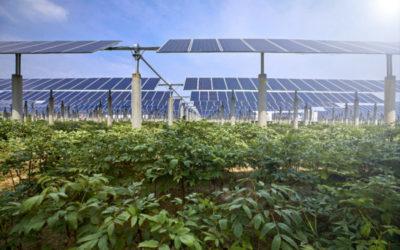 Consumo di suolo, Baldin (M5S): ci sono fondi europei ed esiste l'agrivoltaico!
