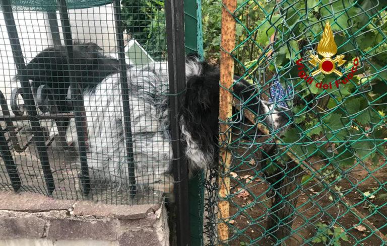 Cucciolotto curioso resta incastrato: salvato dai pompieri