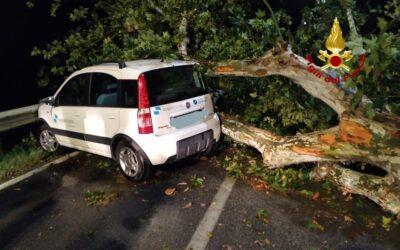 Ad Anguillara auto contro albero caduto in strada: automobilista salvo