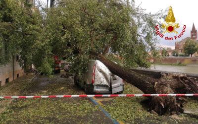 Tifone mediterraneo sul Veneto: the day after [VIDEO]