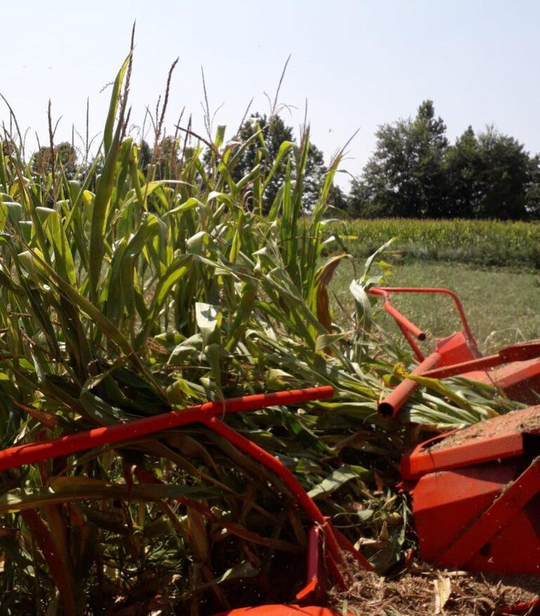 Coldiretti Veneto: per il clima il trinciato di mais in anticipo di 15 giorni