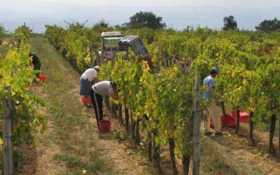 La Coldiretti accelera su contratti di lavoro degli operai agricoli: nel 2020 ben 73mila assunzioni solo in Veneto