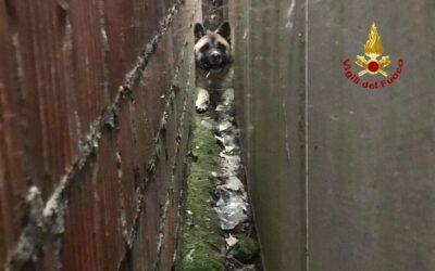 Cane incastrato per tutta la notte tra due muri vicini: liberato!