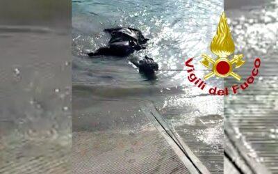 Cavallo e cavaliere nel Piave: salvi grazie ai pompieri [VIDEO]