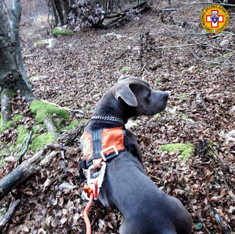 Il Soccorso alpino recupera un cane disperso sopra Podenzoi