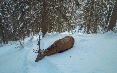 """""""Fermate la caccia: gli animali sono stremati da neve e ghiaccio!"""""""