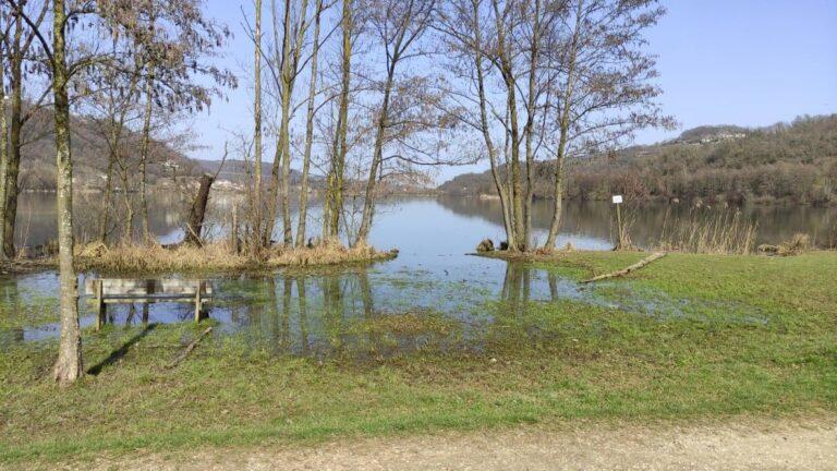 Al lago di Fimon i rospi si sono svegliati e si accoppiano [VIDEO]