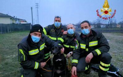 I pompieri pescano e salvano un cane dal canale Giuliari a Verona