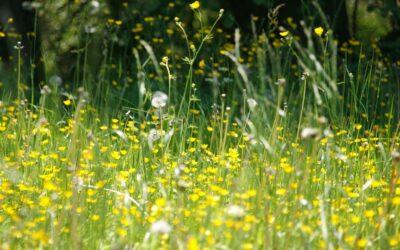 Pollini e spore dei funghi: riparte l'analisi dell'aria da parte dell'ARPAV anche per POLLnet