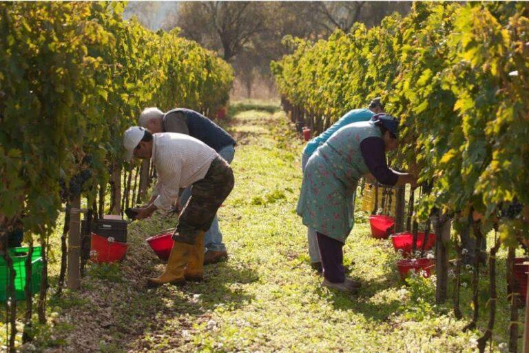 Venerdì 30 aprile sciopero dei lavoratori dell'agricoltura: presidio a Padova