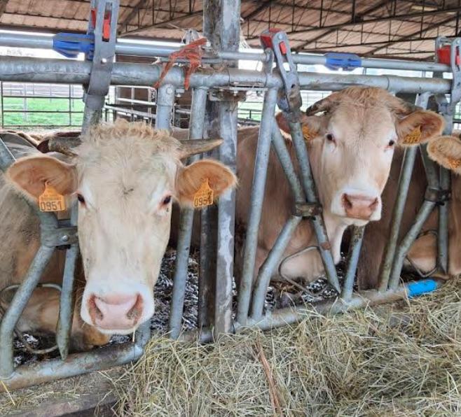 Alle mucche serve internet: la richiesta di Coldiretti per gli allevamenti