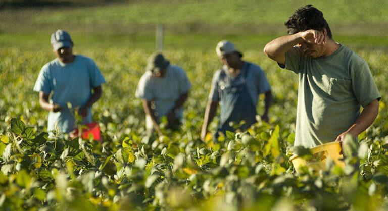 Nei campi del Veneto nel 2020 assunti 15mila stagionali, tanti stranieri