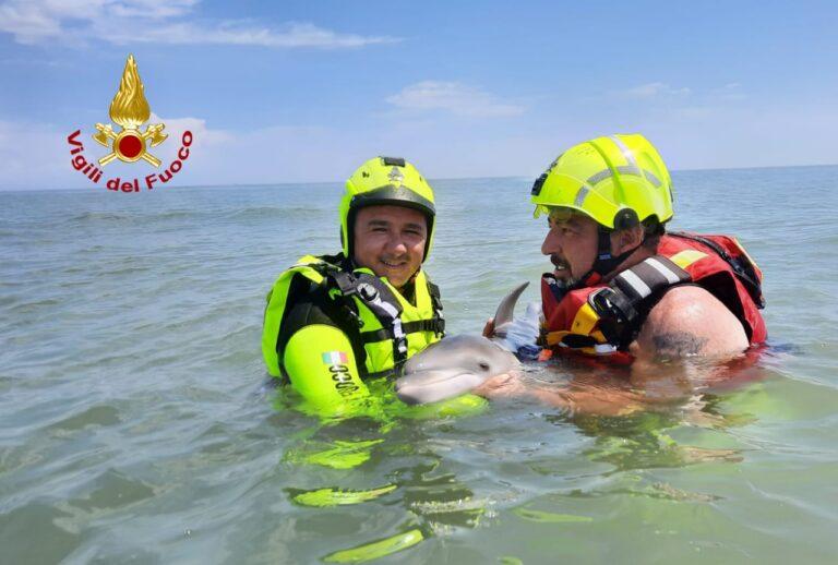 Cucciolo di delfino spiaggiato: tentativo di salvarlo fallito